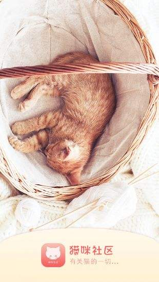 貓咪官網網頁版